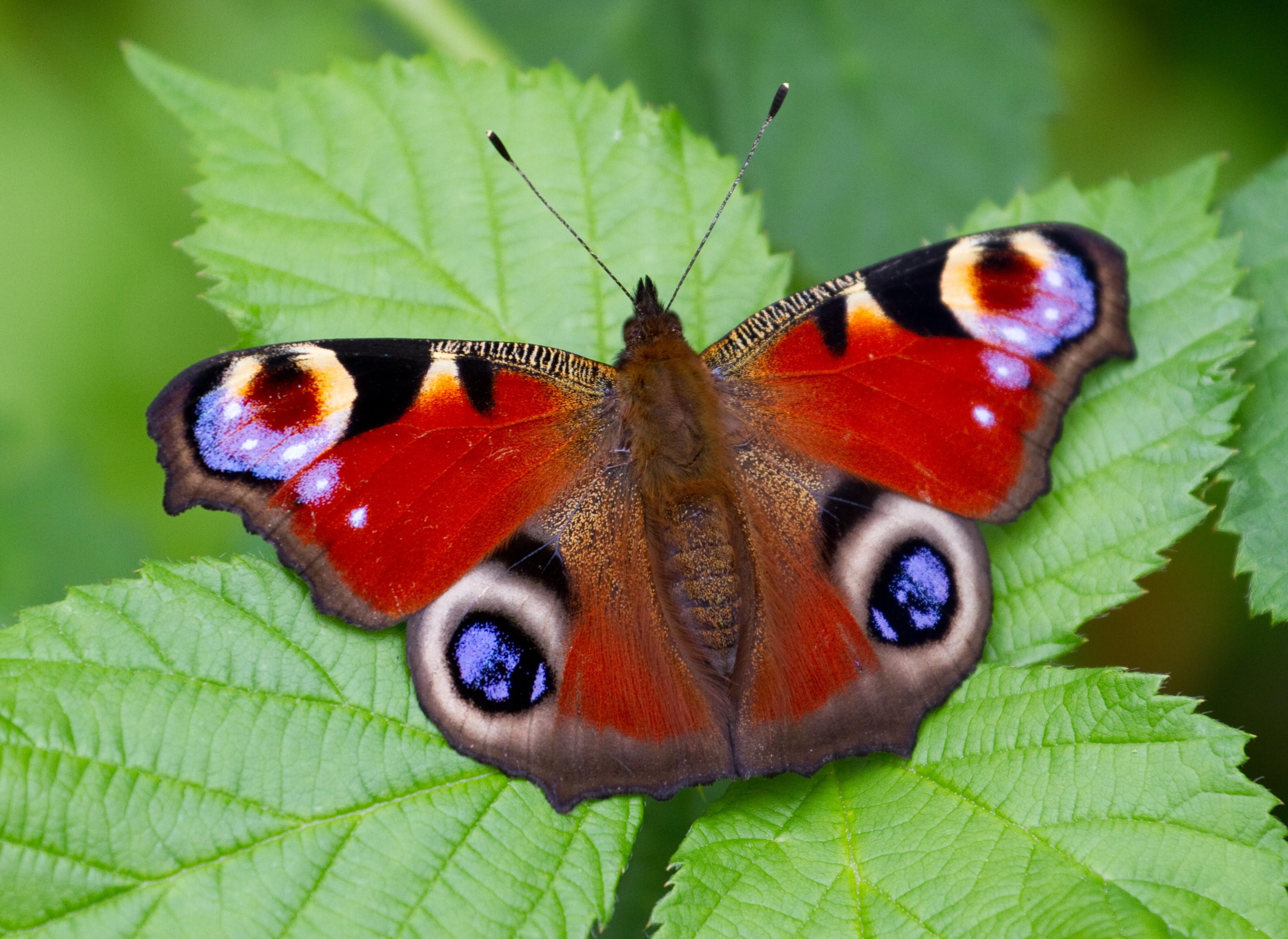 Photo Skills: Butterflies